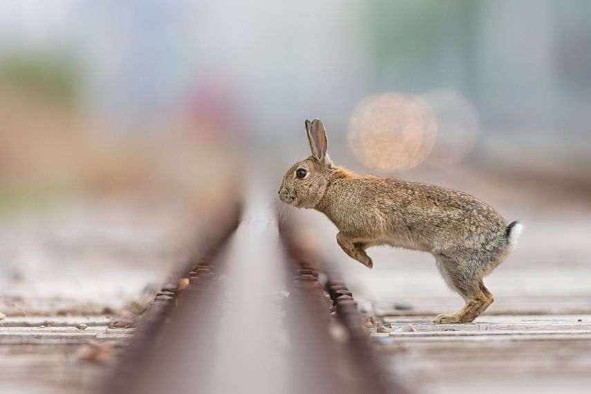 Depth_of_Field_Rabbit